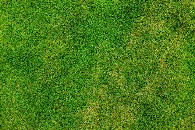 césped verde y cuidados