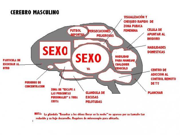 Interior del Cerebro de un Hombre