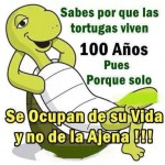 Sabes por que las tortugas viven 100 años. Pues porque solo se ocupan de su vida y no de la Ajena!!!!