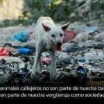 Los animales callejeros no son parte de nuestra basura