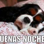 Mascotas te dan las buenas noches