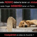 Cada perro debería tener un hogar