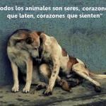 Todos los animales son seres, corazones que laten