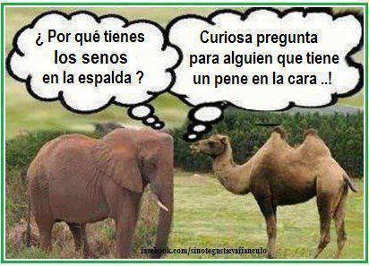 Humor gráfico Humor-27