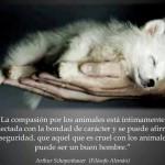 La compasión por los animales está íntimamente conectada con la bondad de carácter... aquel que es cruel con los animales no puede ser un buen hombre