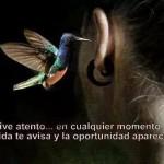 Vive atento... en cualquier momento la vida te avisa y la oportunidad