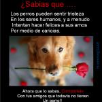 Los perros pueden sentir tristeza