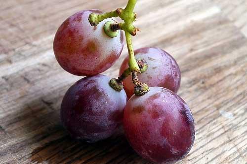 uva-roja