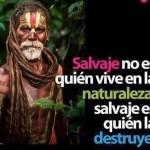 Salvaje no es quien vive en la naturaleza, salvaje es quien la destruye