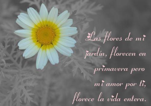 Las flores en mi jardín, florecen en primavera pero mi amor por ti, florece la vida entera.