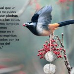 Al igual que el pájaro no puede volar con piedras
