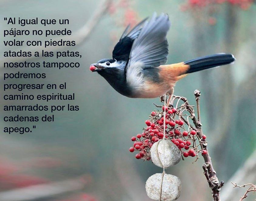 Al igual que el pájaro no puede volar con piedras atadas a las patas, nosotros tampoco podemos regresar en el camino espiritual amarrados por las cadenas del apego