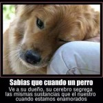 Sabías que cuando un perro ve a su dueño...