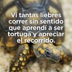 Vi tantas liebres correr sin sentido que aprendí a ser tortuga y apreciar el recorrido