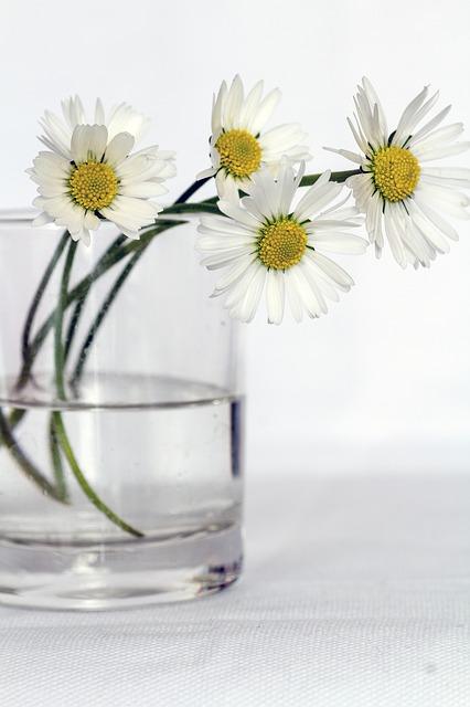 flores-salud