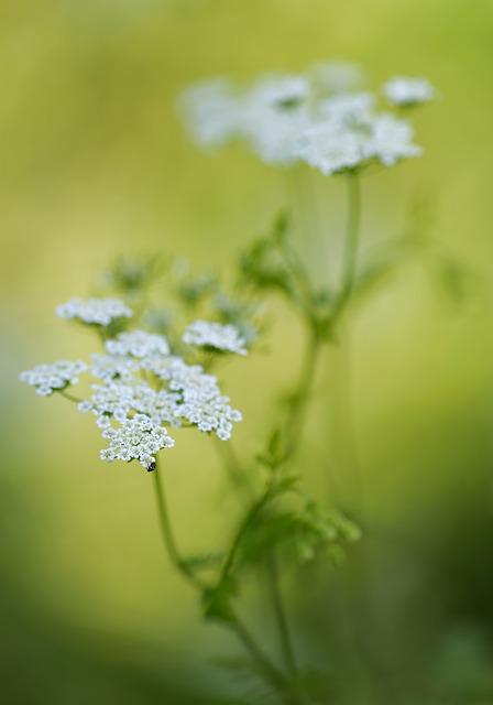 flores-significado