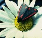 jardin-mariposas