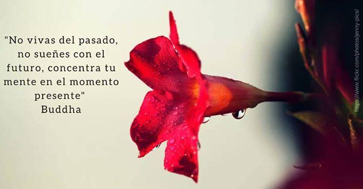 No vivas del pasado, no sueñes con el futuro, concentra tu mente en el momento presente