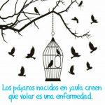 Los pájaros nacidos en jaula creen que volar es una enfermedad