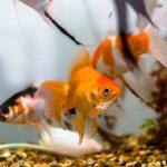 acuario-peces