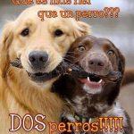 Qué es más fiel que un perro??? Dos perros !!!!