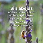 Sin abejas, no hay polinización, no hay agricultura...