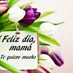 Feliz Día Mamá. Te quiero mucho. Muchas Felicidades