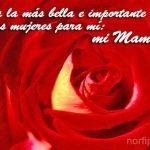 Para la más bella e importante de las mujeres para mí: Mi Mamá