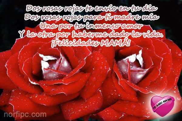 Dos rosas rojas te envío en tu día. Dos rosas rojas para ti...