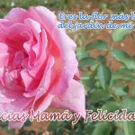 Gracias Mamá y Felicidades. Eres la flor más bella del jardín...