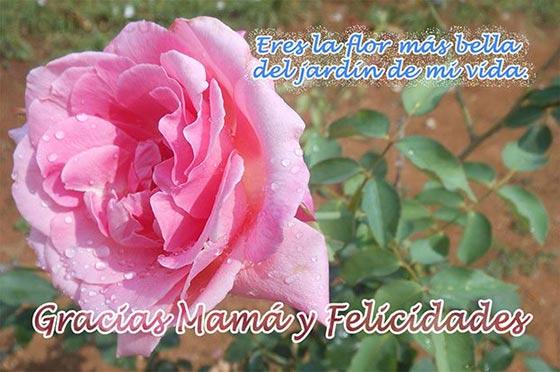 Gracias Mamá Y Felicidades Eres La Flor Más Bella Del Jardín
