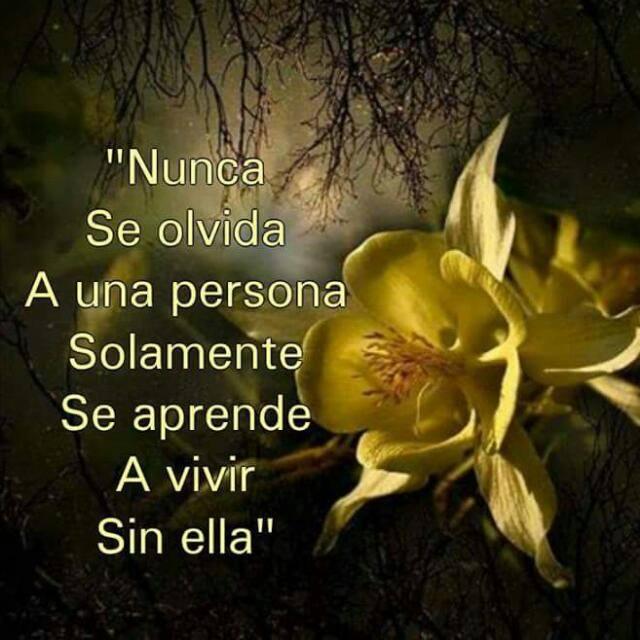 """""""Nunca se olvida a una persona. Solamente se aprende a vivir sin ella"""""""