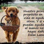 Nuestro principal propósito en esta vida es ayudar a otros