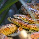 terrario, serpientes