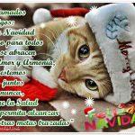 Feliz Navidad a mis amados amigos