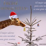 El mejor adorno para esta navidad es una gran sonrisa.