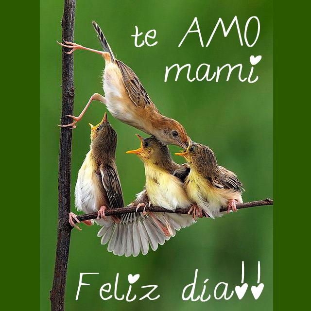Feliz día de la madre. Te amo mami