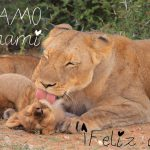 Te amo mami. Feliz día de la madre