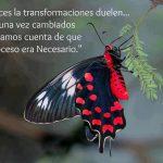 A veces la transformaciones duelen... pero una vez cambiados nos damos cuenta de que el proceso era necesario