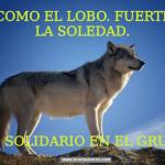 Sé como el Lobo. Fuerte en la Soledad. Solidario en el Grupo.