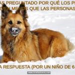¿Te has preguntado por qué los perros viven menos que las persona? Aquí la respuesta (por un niño de 6 años)