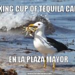 Relaxing Cup of tequila cabrito, en la Plaza Mayor