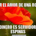 Por el amor de una rosa, el jardinero es servidor de mil espinas, el jardinero es servidor de mil espinas