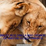 Los animales nos dan la mas...