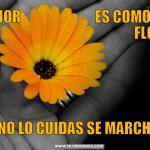Meme de usuario El amor es como una flor