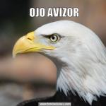 Meme de usuario ojo avizor